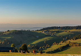 Enjoy holidays on our farm in the Münstertal valley in the southern Black Forest, Germany
